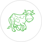 calf dairy products